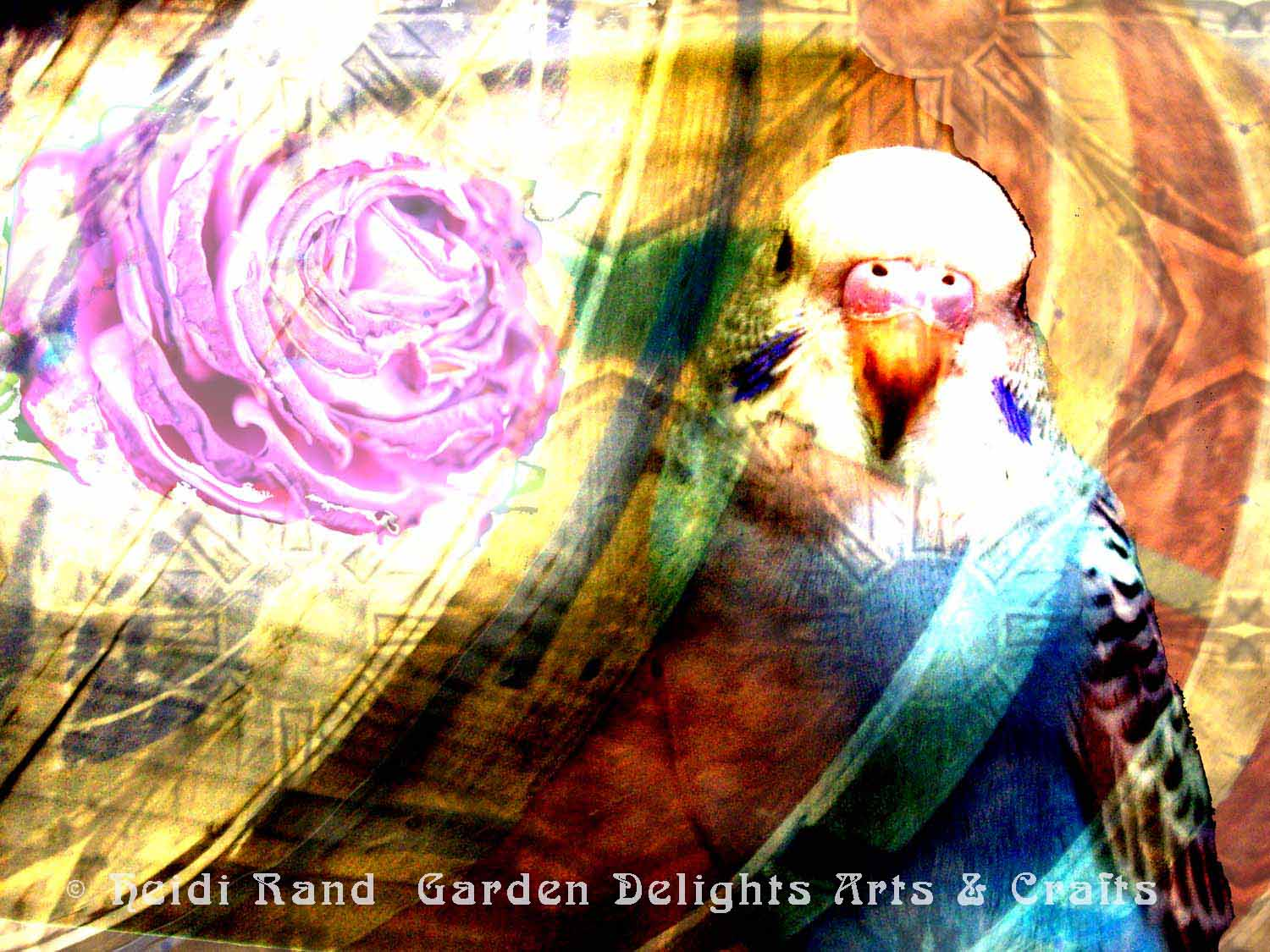 Parakeet Rose collage