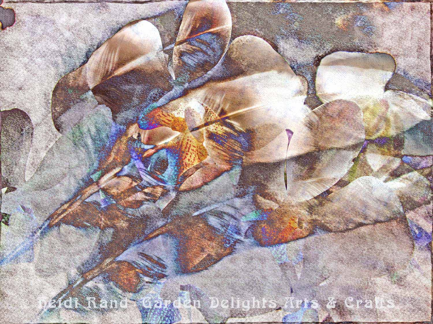 Phalaenopsis and Feather collage