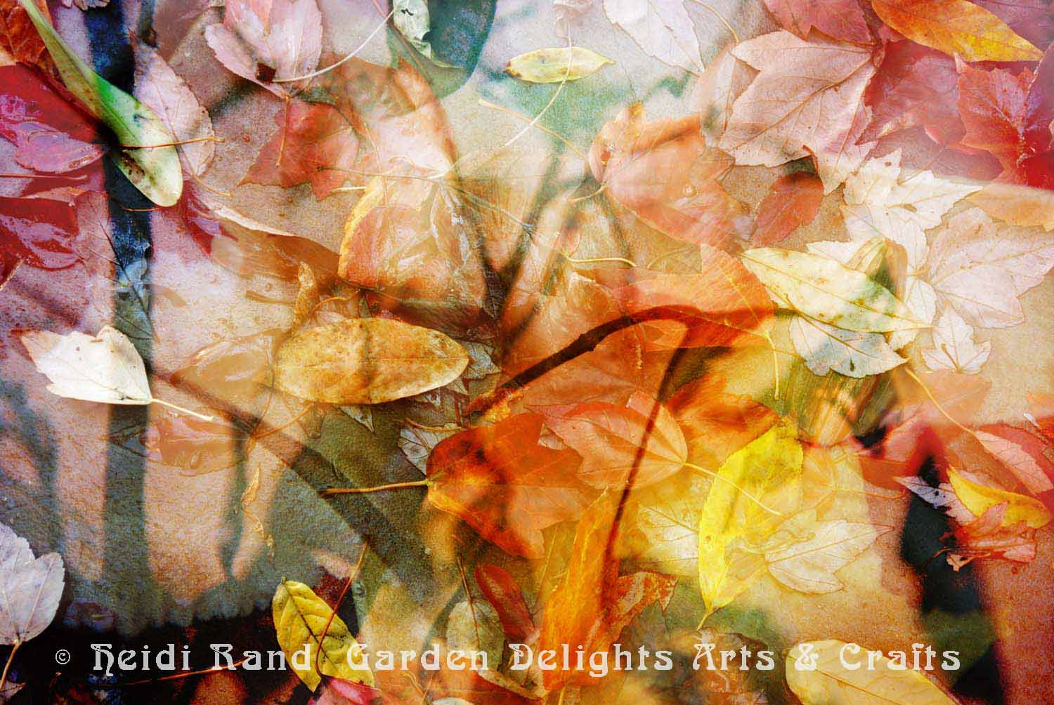 Sunset fallen leaves