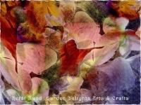 Cattleya and phalaenopsis collage