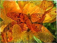 Golden butterfly and lily collage