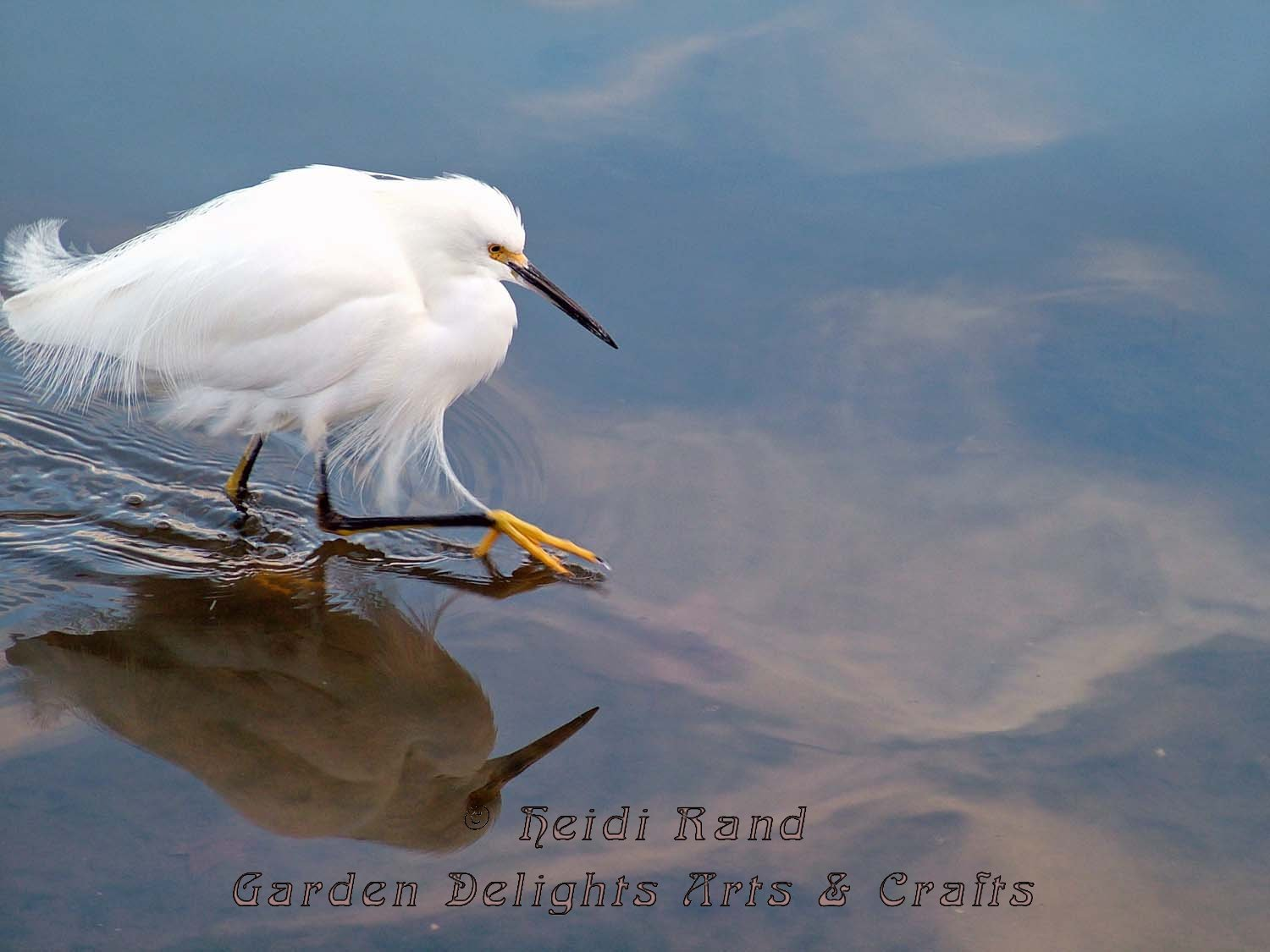 Egret Stalking Lake Merritt
