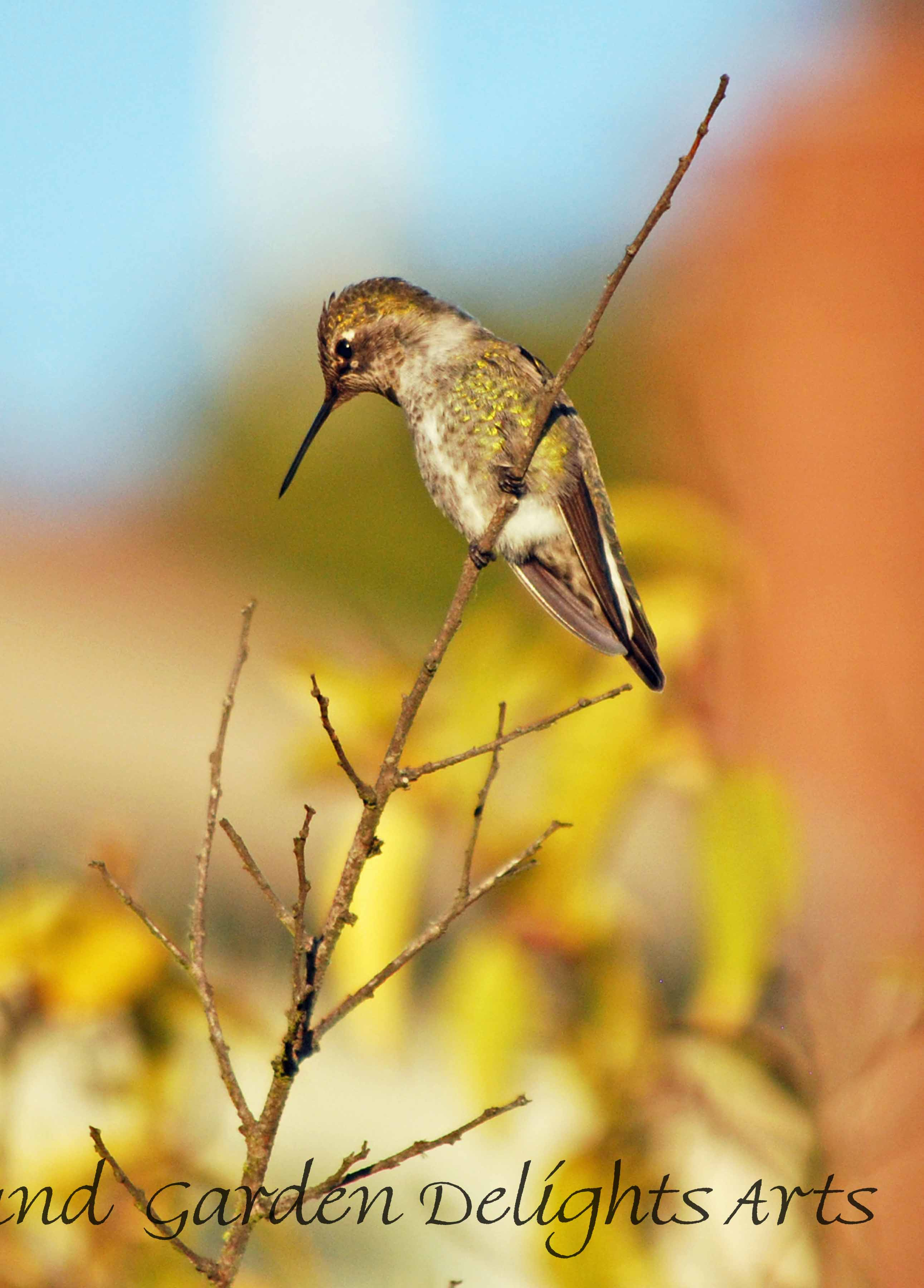 Hummingbird on twig