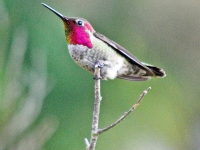 Hummingbird in tree
