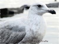 Gull Lake Merritt