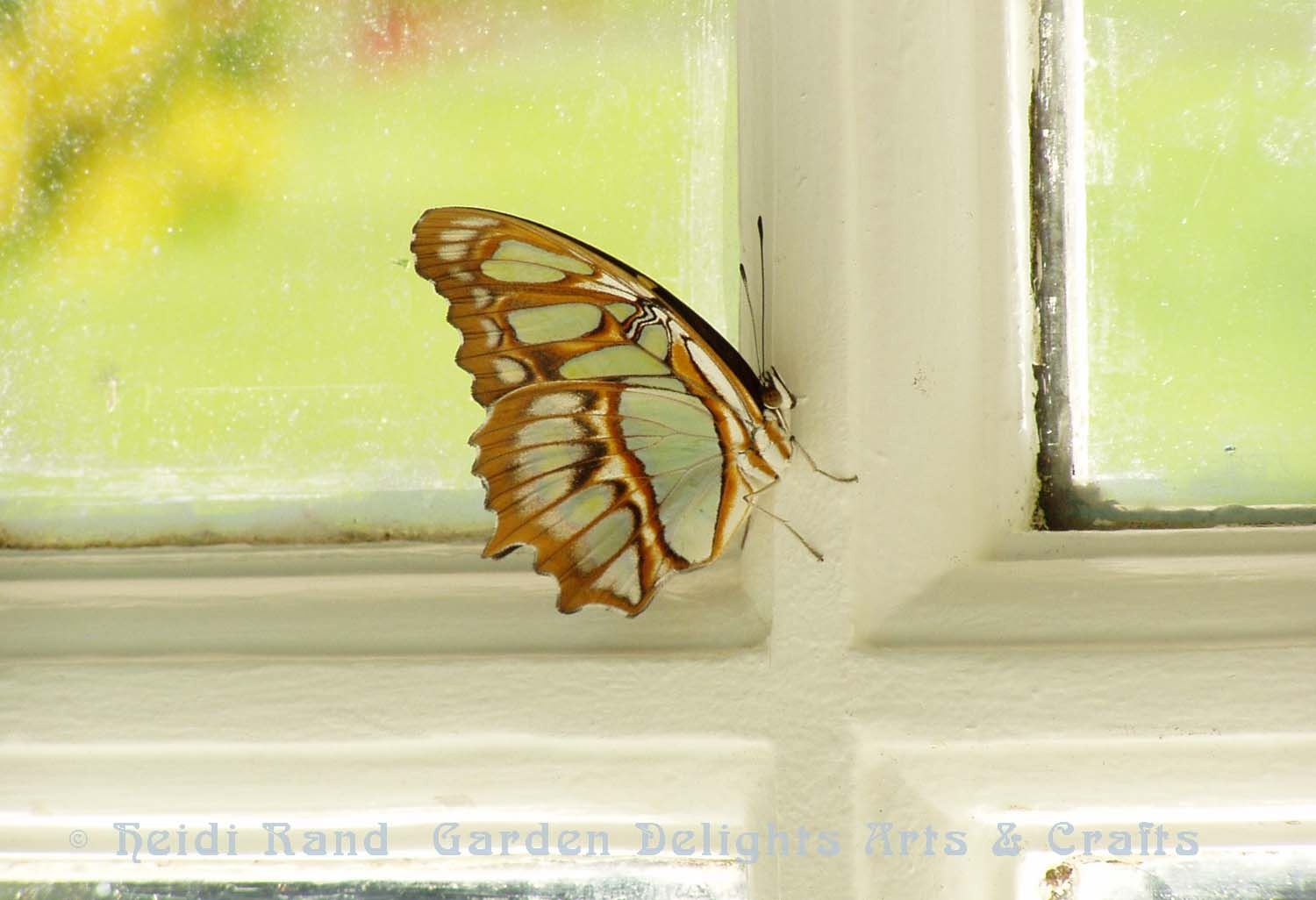 Yellow butterfly in window