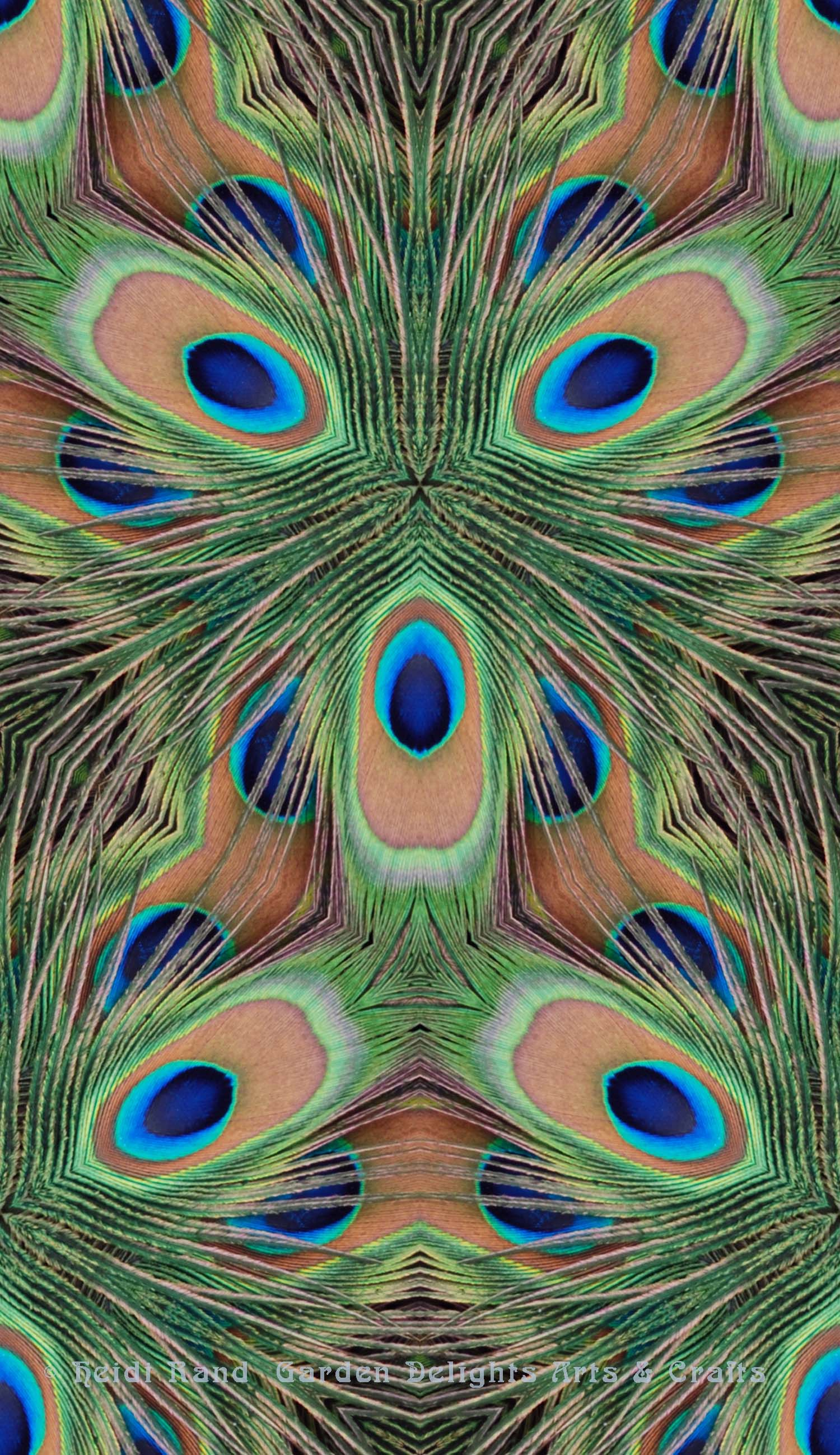Peacock feathers eye