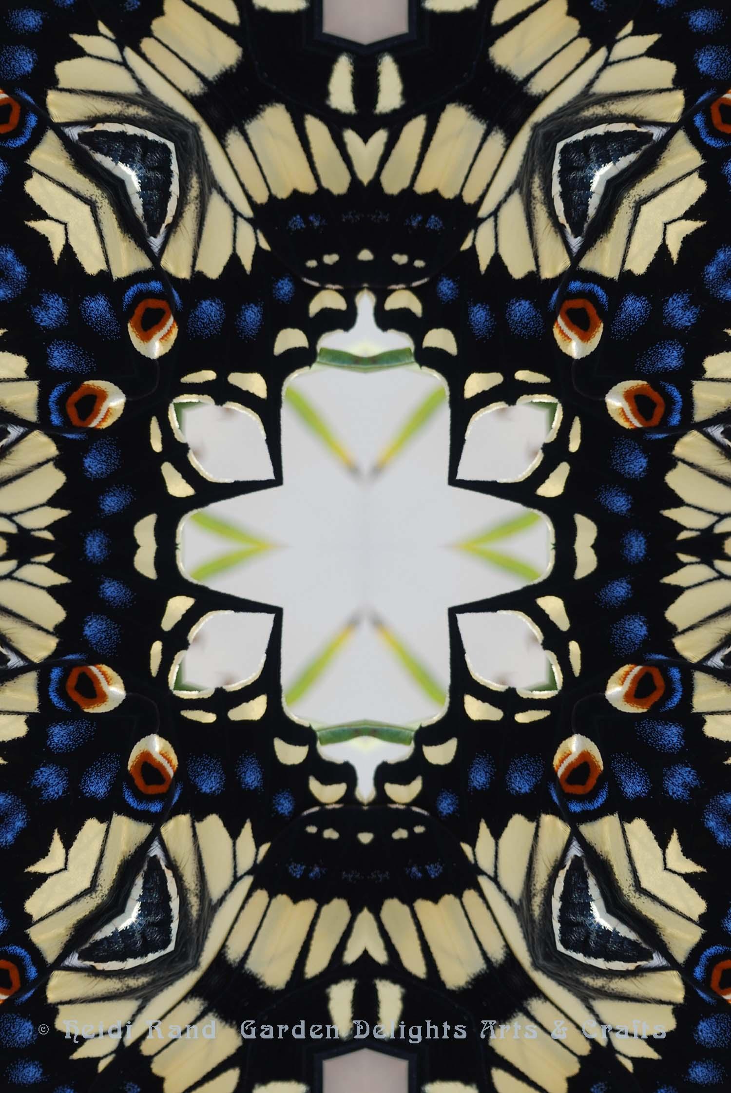 Swallowtail white