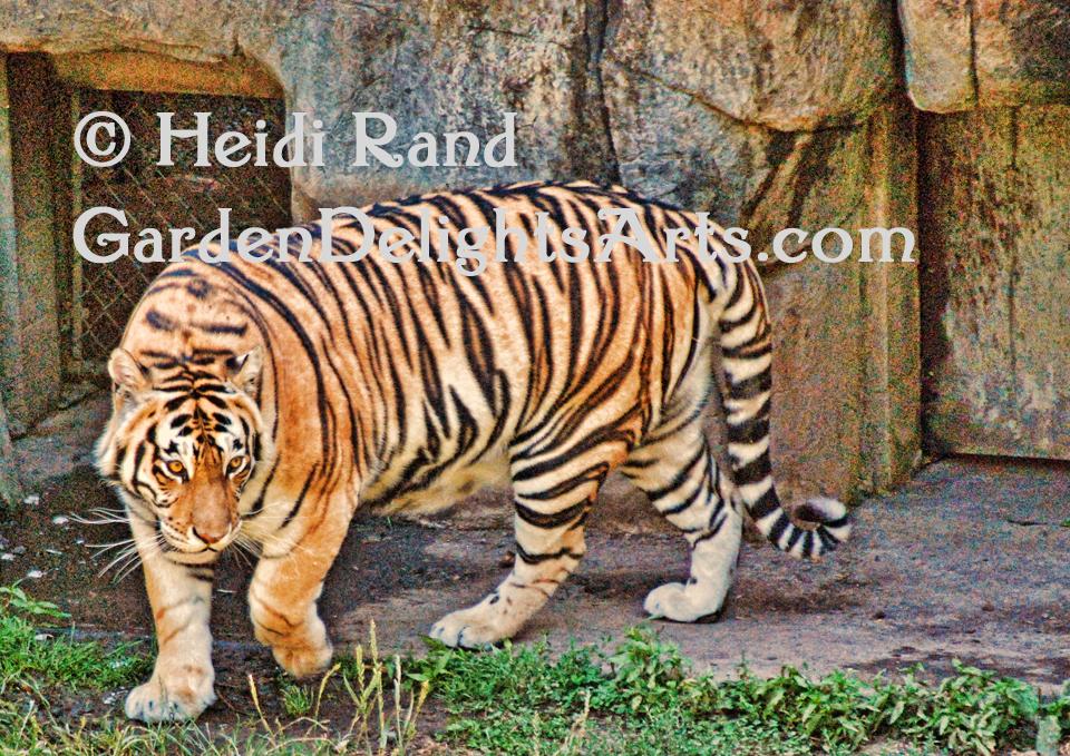 Tiger GR1359