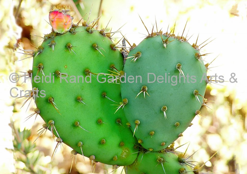 Cactus heart. Greeting card 1382