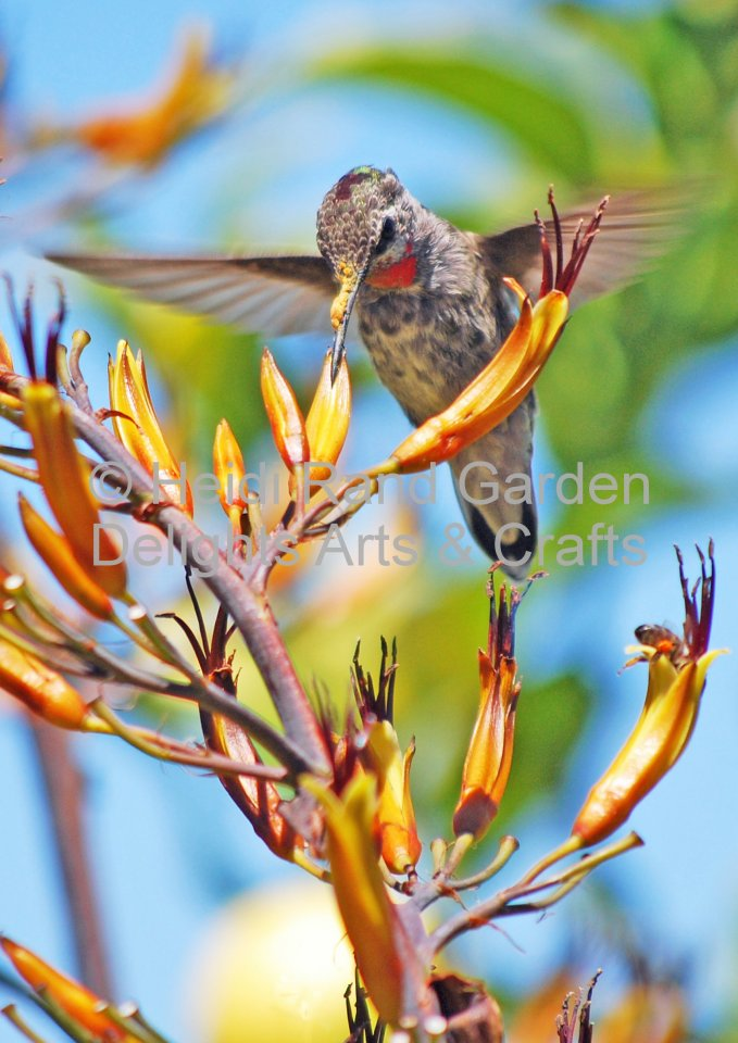 Hummingbird at flax flower. Greeting card 1004