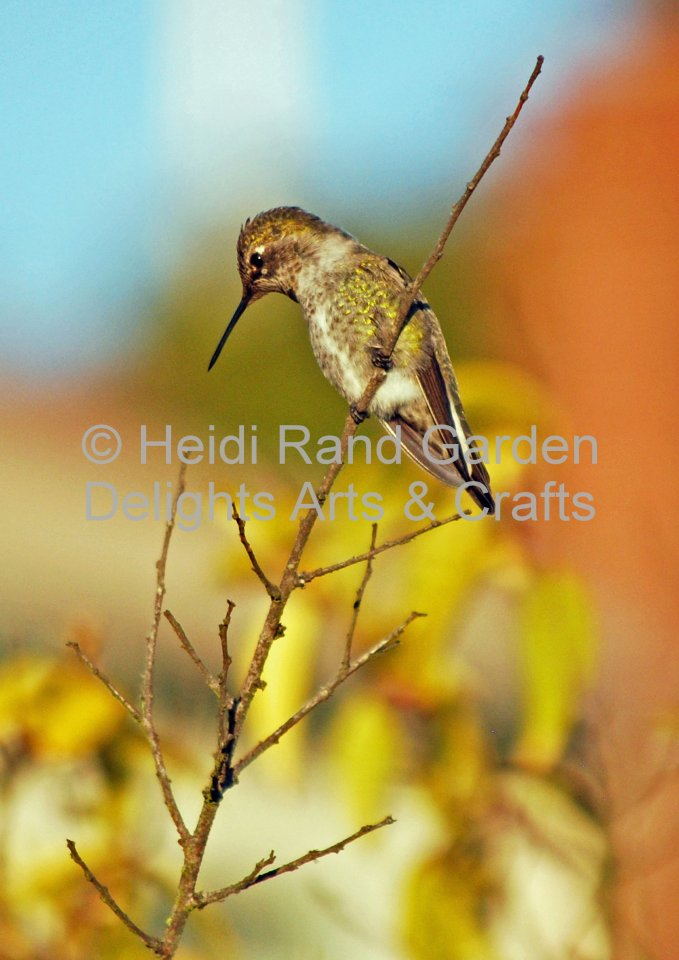 Hummingbird in tree. Greeting card 1005