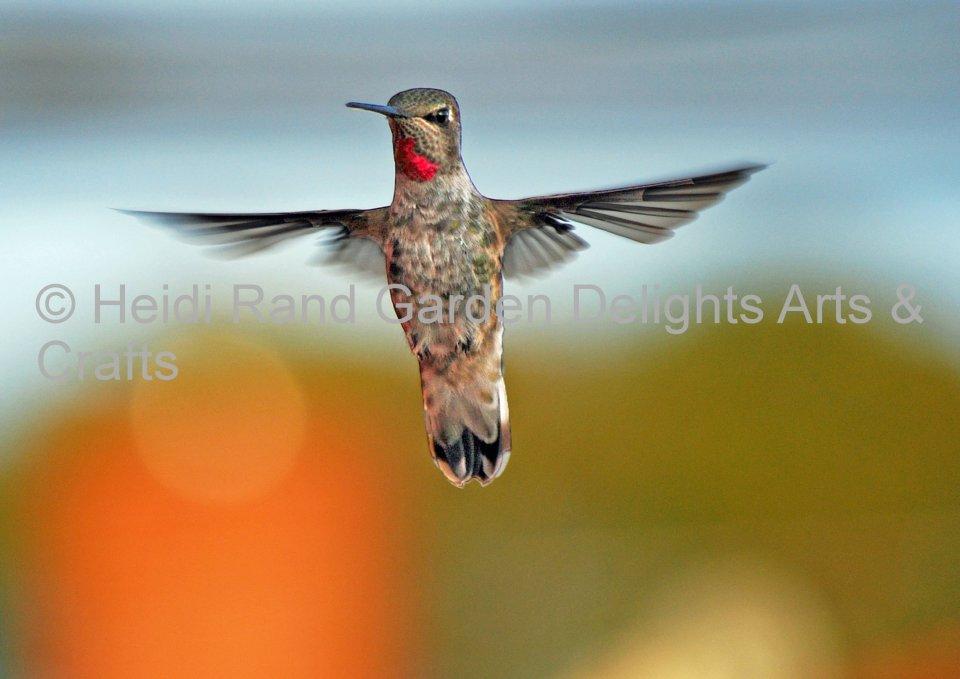 Hummingbird hovering. Greeting card 1007