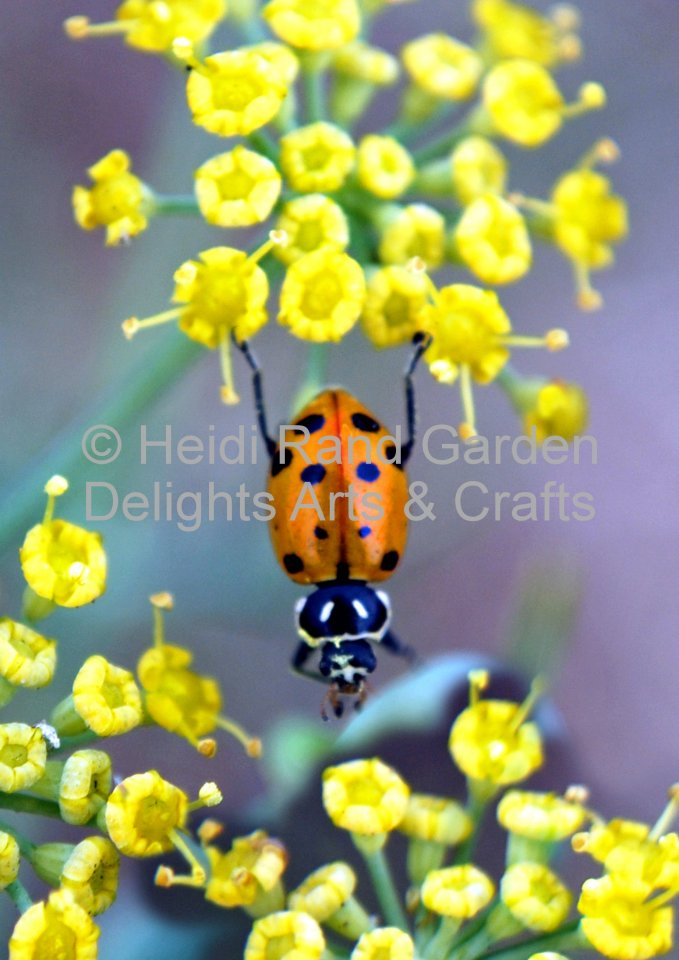 Ladybug stretching. Greeting card 1053