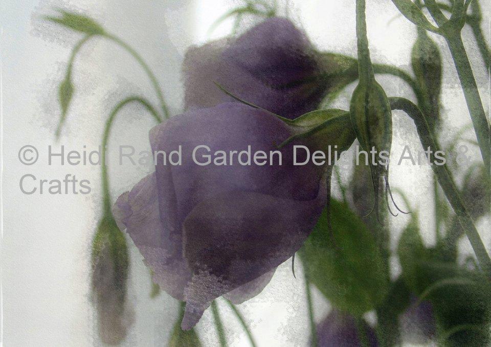 Lisianthus flower. Greeting card 1088