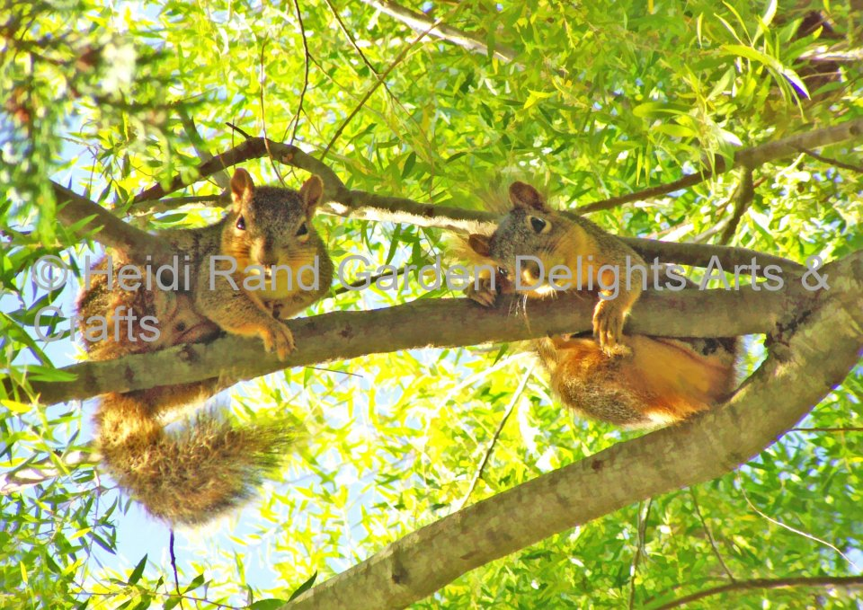 Squirrels hanging out. Greeting card 1351
