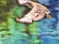 Egret soaring. Greeting card 1018