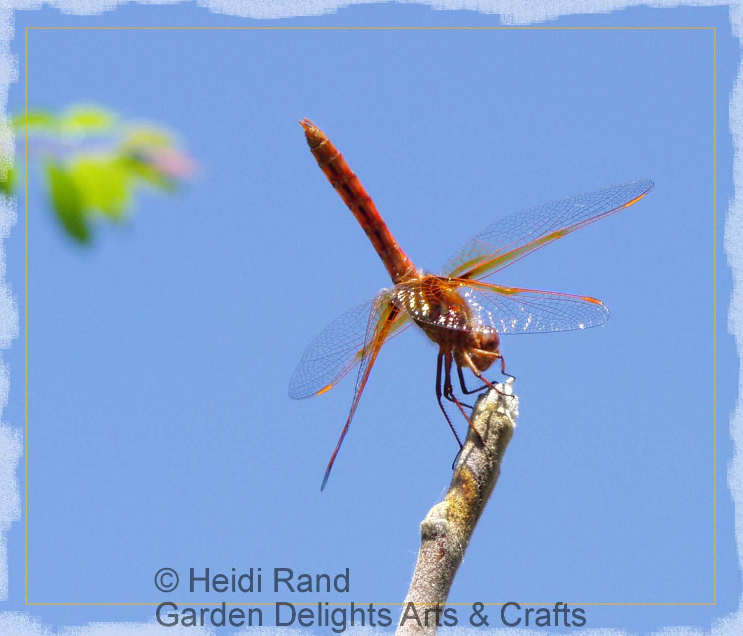 Scarlet darter dragonfly against sky
