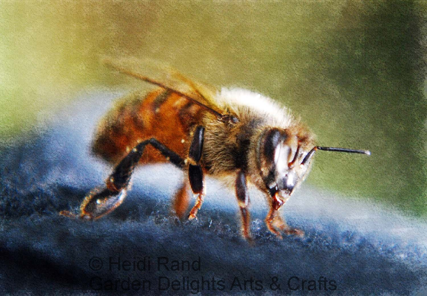 Honeybee painterly