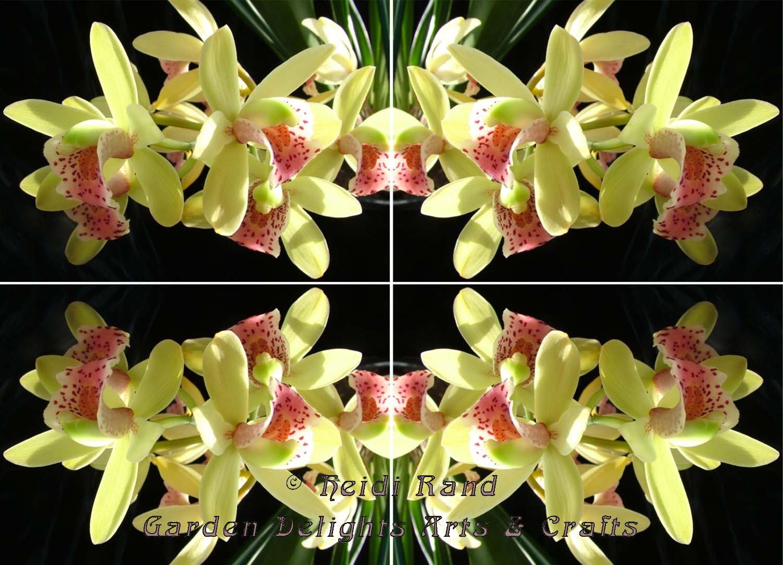 Cymbidium bright kaleidoscope