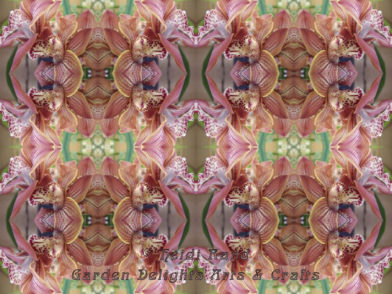 Cymbidium pink kaleidoscope
