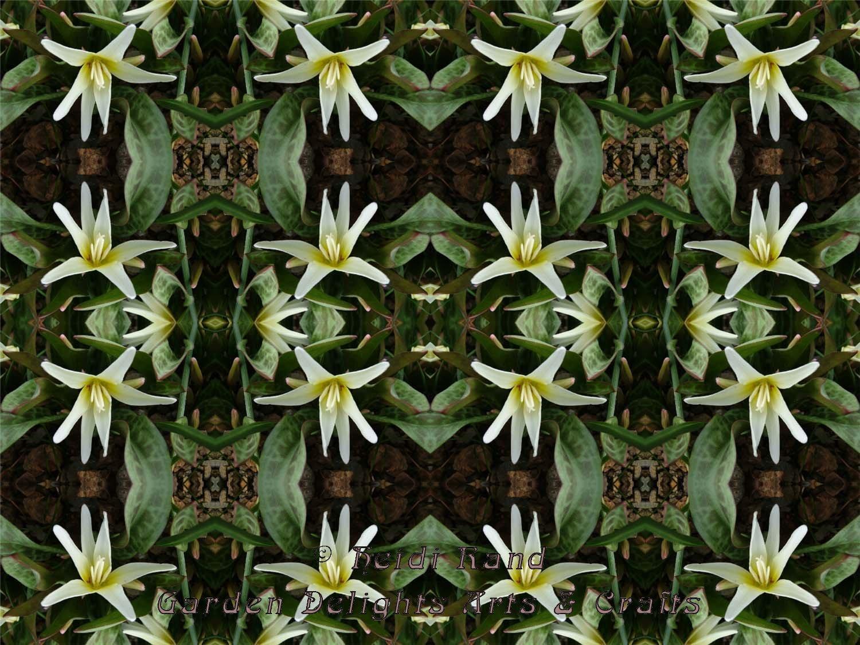 Fawn lily kaleidoscope