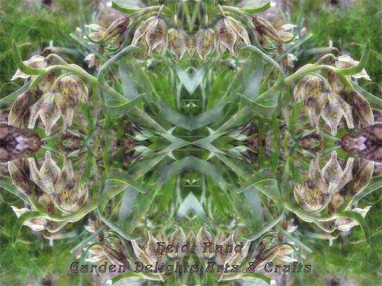 Fritillaries kaleidoscope