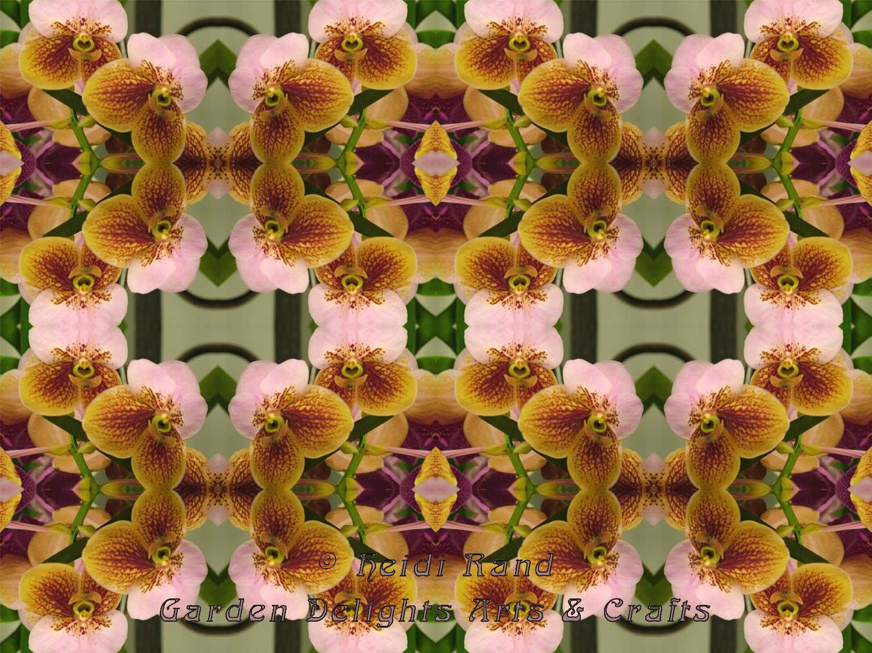 Phalaenopsis weave kaleidoscope
