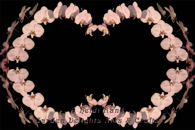 Arching phalaenopsis kaleidoscope
