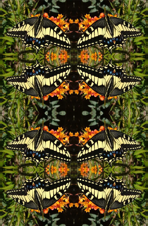 Swallowtail butterfly on black kaleidoscope