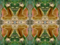 Butterscotch rose kaleidoscope