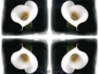 Calla glow kaleidoscope