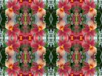 Orchid reds kaleidoscope