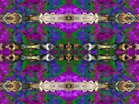 Phalaenopsis and feather collage  kaleidoscope