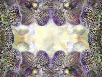 Purple phalaenopsis fine kaleidoscope
