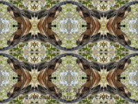 Raptor kaleidoscope