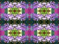 Wisteria kaleidoscope