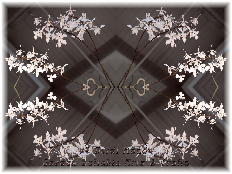 White oncidium spray kaleidoscope