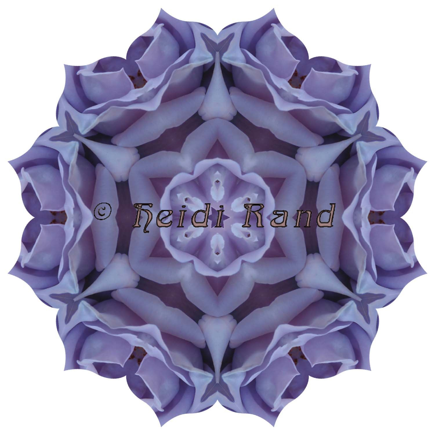Blue girl rose mandala