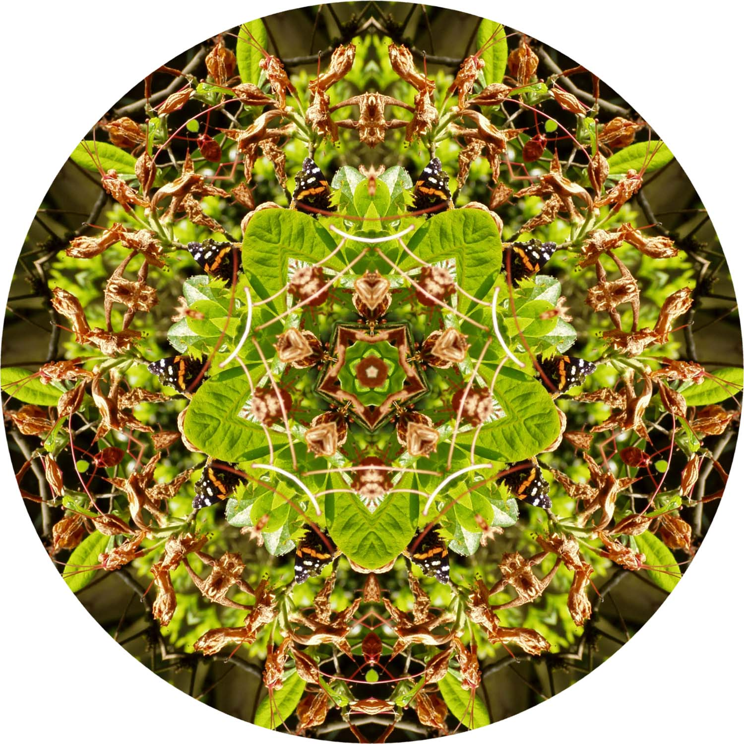 Butterfly on green mandala