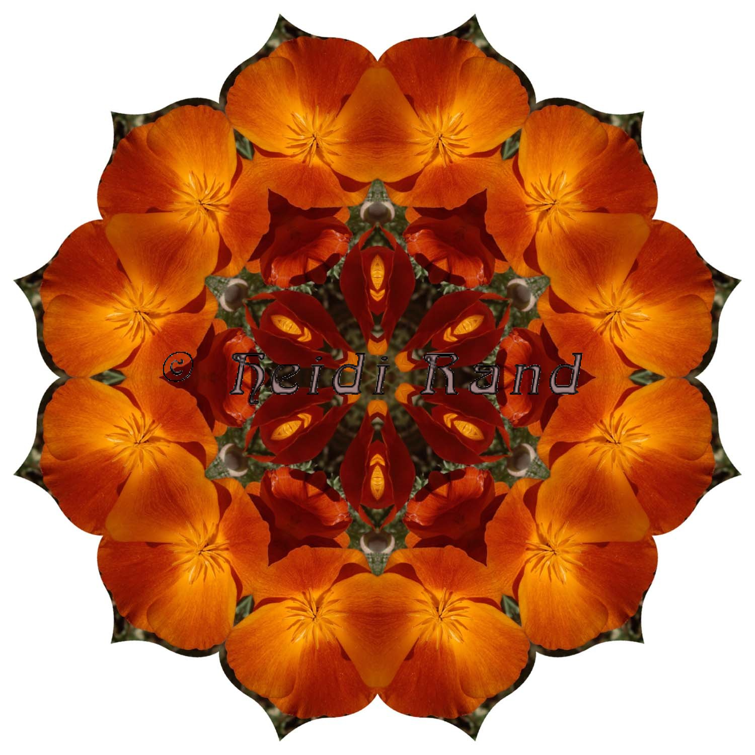 California poppy mandala