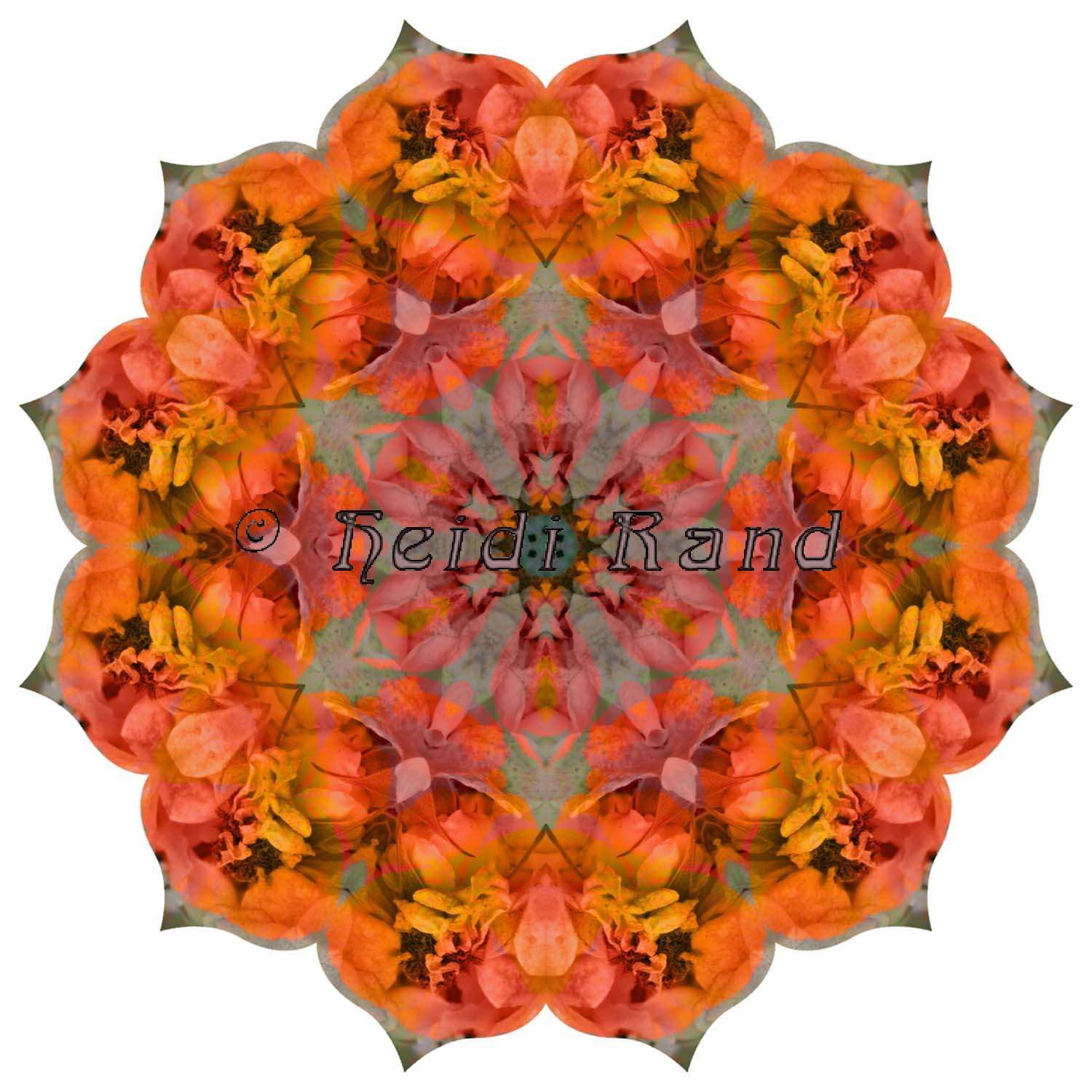 California poppy Sally Holmes rose mandala
