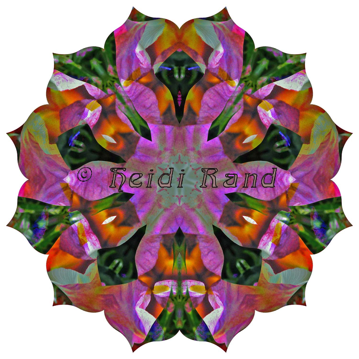 Calla lily black iris collage mandala