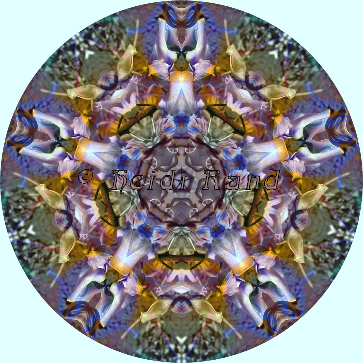 Iris multicolor and wisteria mandala