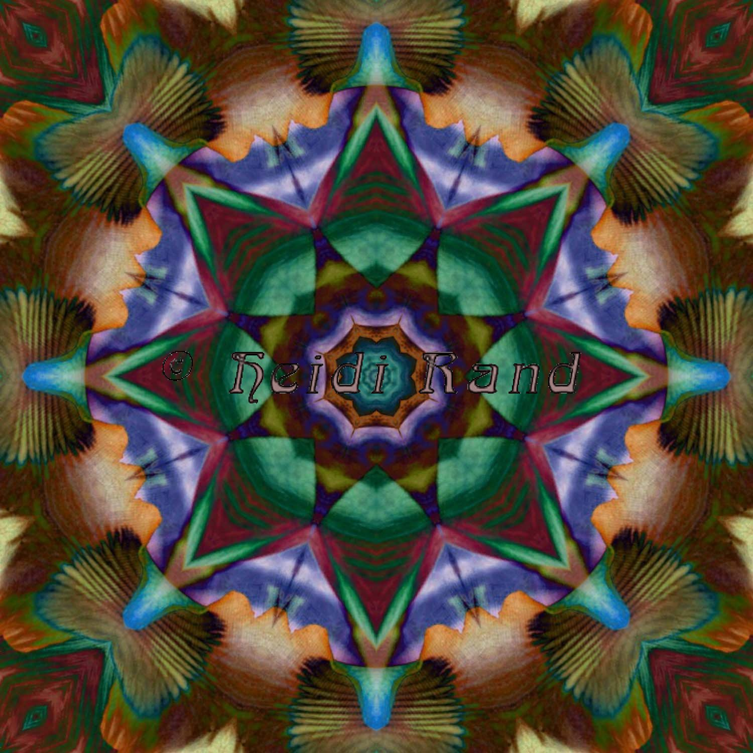 Laelia feather collage mandala