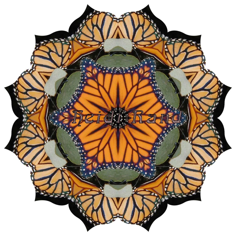 Monarchs lotus mandala