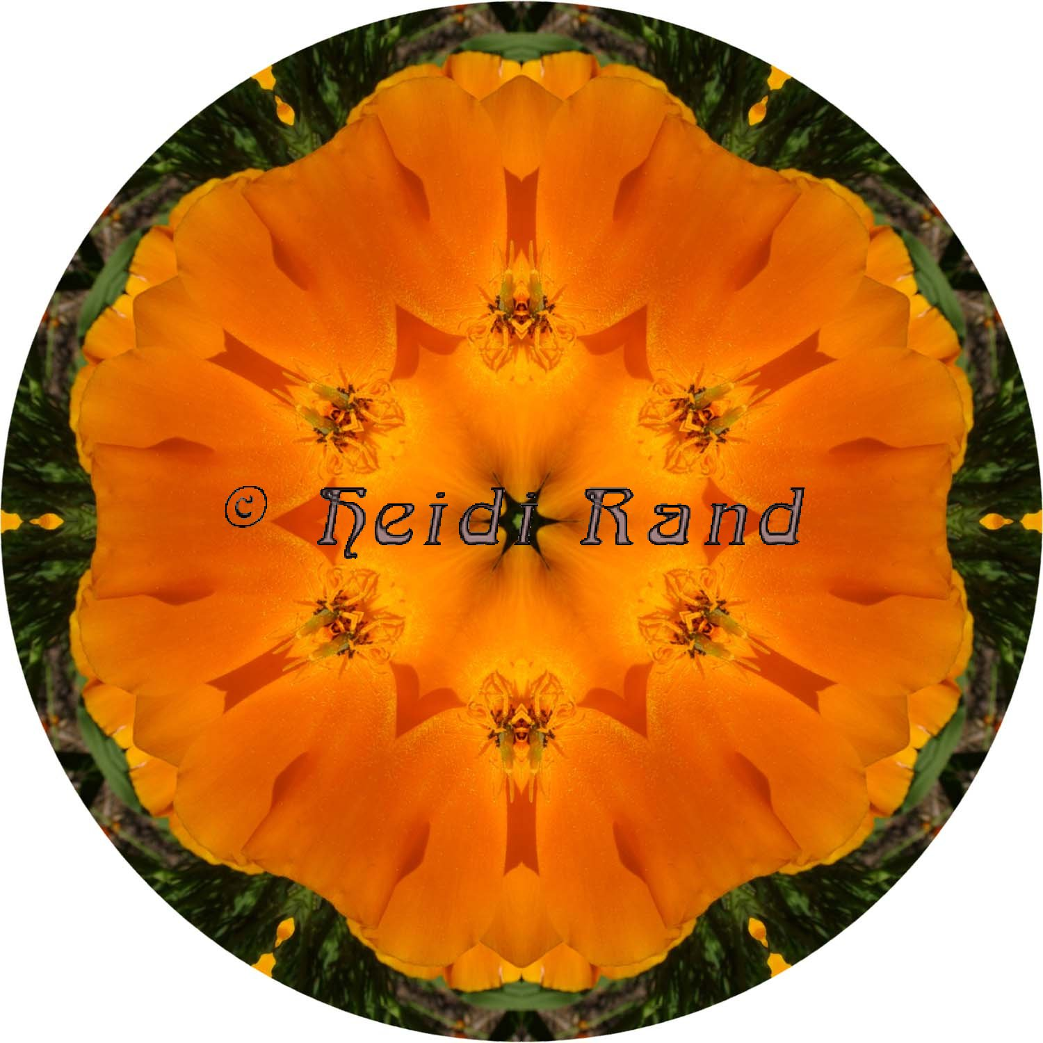 California poppy circle mandala