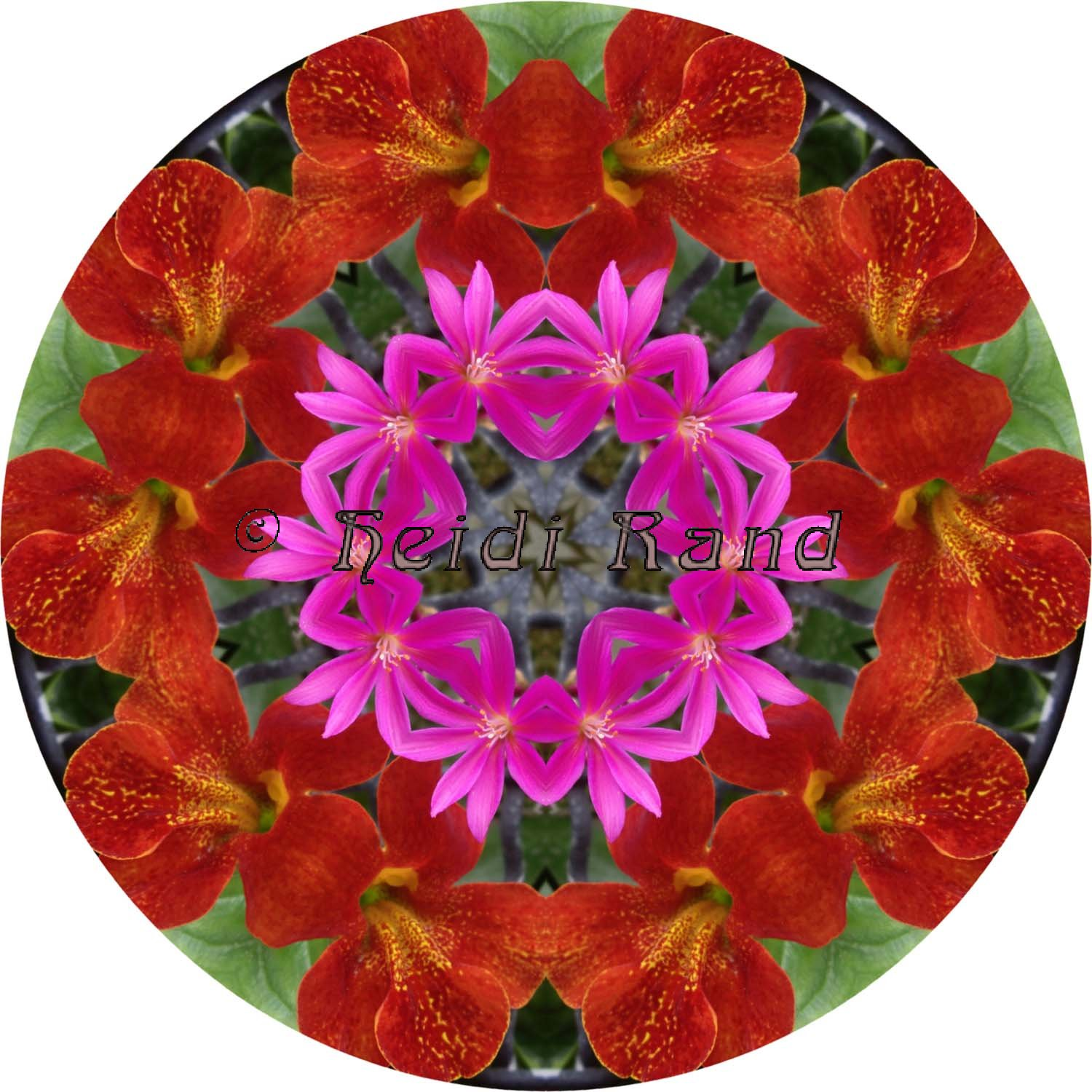 Red mimulus with pink mandala