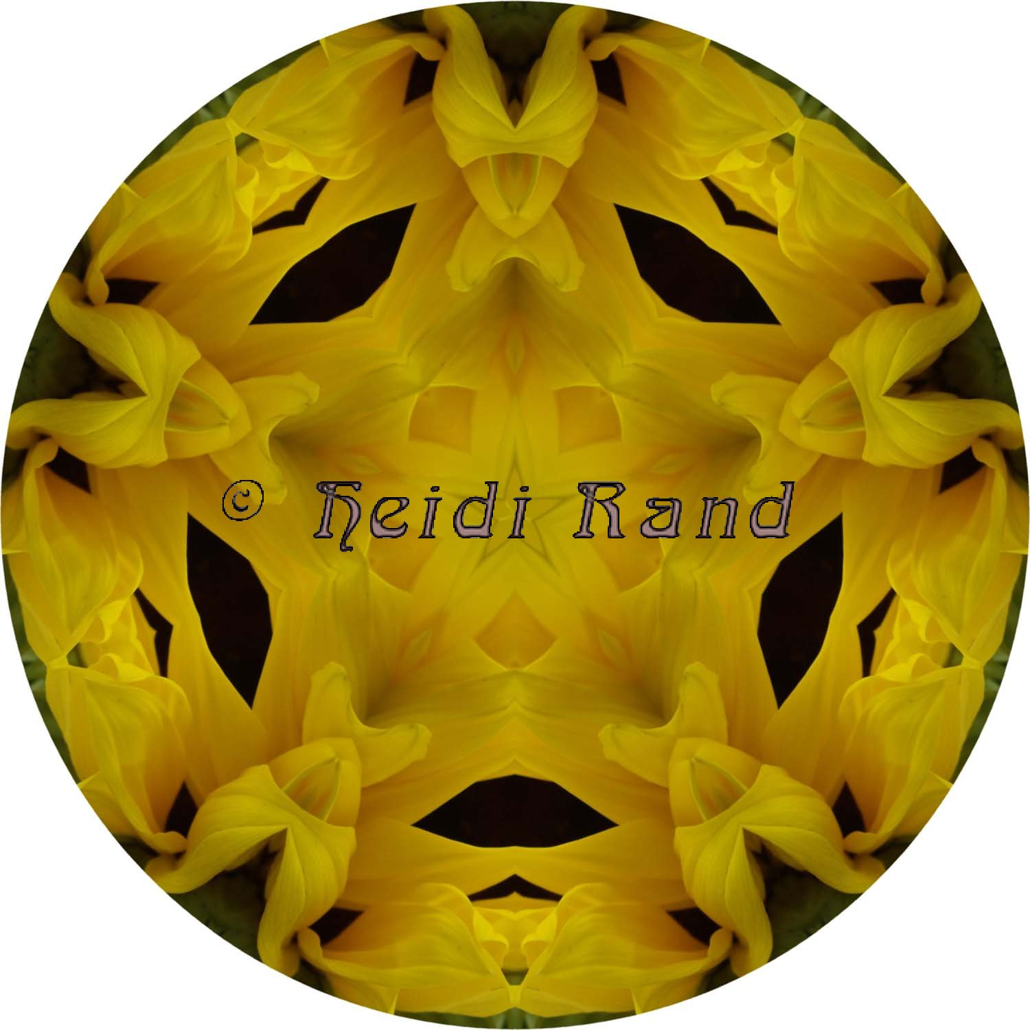 Sunflower sideways circle mandala