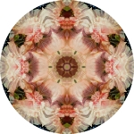 Angel trumpet and pink hollyhock mandala